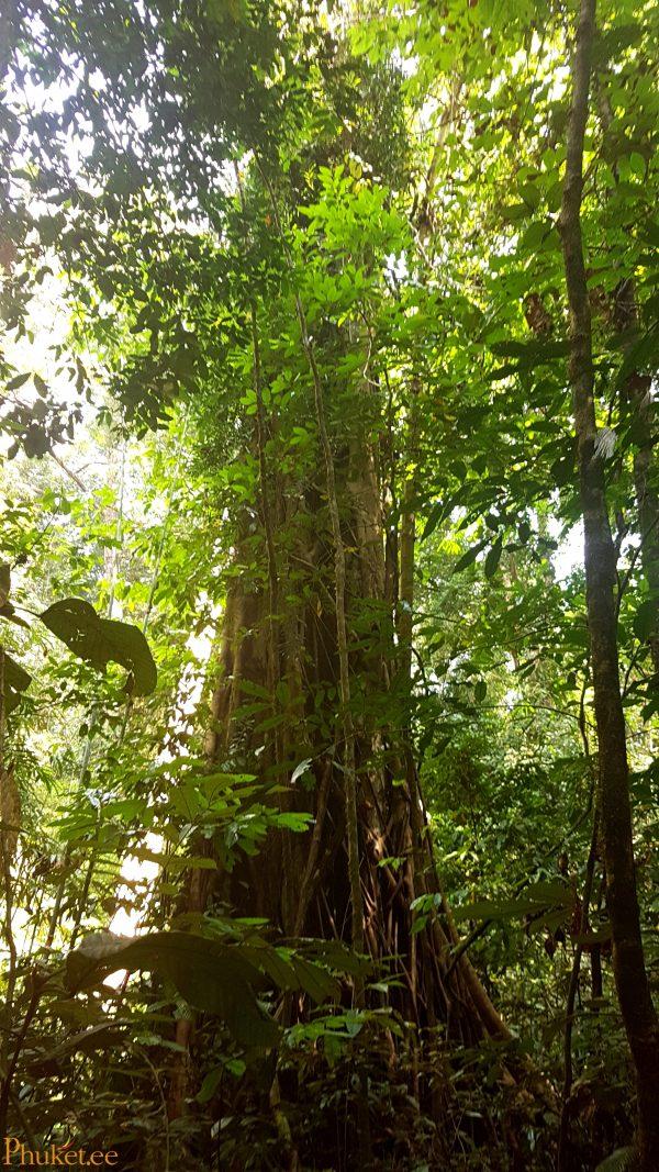 džunglitripp